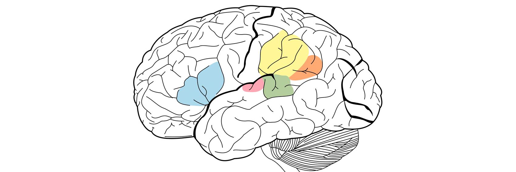 What Is Neurolinguistic Programming?
